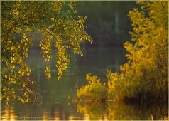 Ветки березы в закатном свете