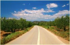 Греция. Горная дорога через оливковую рощу