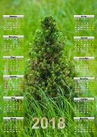 Скачать бесплатно календарь на 18 год. Канадская ель в траве. Формат А3
