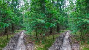 Стерео фотография. Пасмурный лес