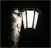 Ночная фотография с березой и фонарем