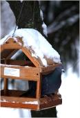 Кормушка для птиц в зимнем парке. Голубь. Зимние фото