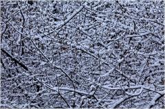 Ветки дерева под снегом. Зимние фото