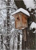 Скворечник фото. Домик для птиц.  Зимний парк