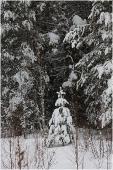 Маленькая елочка под снегом на лесной опушке