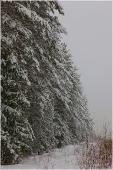 Опушка зимнего леса. Сумерки. Фото