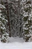 Заблудиться в лесной чаще. Зимние фото