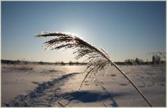 Солнечный зимний день. Съемка в контровом свете. Свет и тень в зимних пейзажах