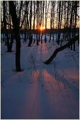 Закат солнца в березовой роще. Свет и тень в зимних пейзажах