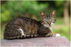 Бесплатные коты. Фотография турецкого кота