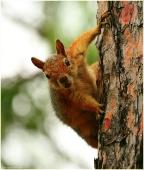 Белка на дереве. Внимательная белка