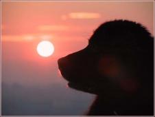 Собака и Солнце. Вечерний пейзаж с собакой