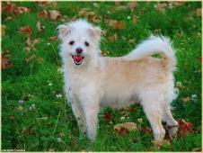 Счастливая рыжая собачка. Фотографии собак. Красивые собаки