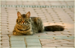Фотография кошки на улице. Кошка на асфальте. Внимательный кот