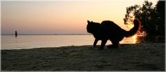 Кот на берегу. Кот на пляже. Кот ждет хозяина. Кот волнуется за хозяина