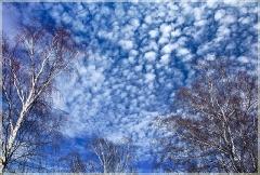 Весенее небо и березы
