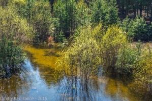 Теплый разлив. Река Керженец Нижегородская область. Фото