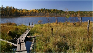 Осенний пейзаж. Мостик, озеро, лес
