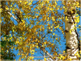 Ветер осенний тихо листья колышет