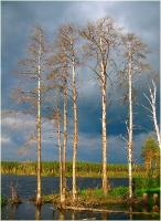 Святое озеро. Высохшие деревья