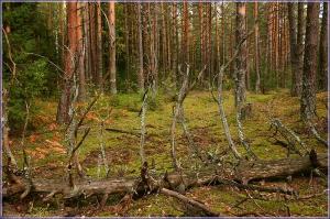 Найти корягу в лесу - к удаче. Красивые осенние фото