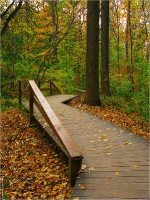 Деревянные дорожки осеннего парка. Красивые фото осенней природы