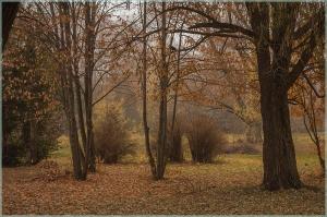 Прогулка по туманному лесу