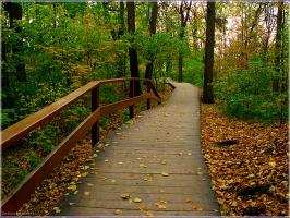 Деревянные тропинки в осеннем парке. Красивые фото осенней природы