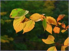 Цвета осенних листьев. Картина Осенние листья. Красивые фото осенней природы