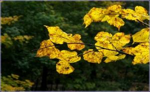 Желтые листья фото. Почему листья желтеют. Красивые фото осенней природы