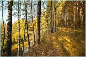 Осенний лес. Тропинка по берегу реки