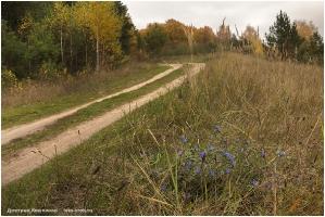 Осенние полевые цветы. Синие цветы. Фото