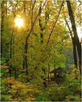 Осенняя беседка. Солнечные лучи в желтых листьях. Красивые фото осенней природы