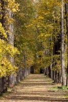 Осень в старой липовой аллее