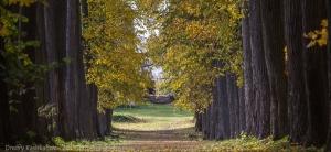 Осень в старых липах