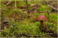 Натюрморт с грибом во мху. Осенний лес. Фото