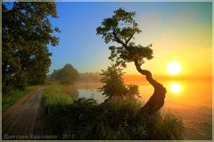 Рассвет над озером. Кривое дерево