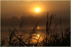 Утренний пейзаж с травой и восходом солнца