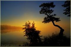 Красивый восход солнца. Кривое дерево у озера.  Фото