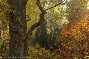 Коряга и красные осенние листья. Фото высокого разрешения