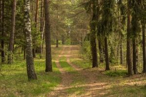 Дорога в лесу. Фотографии лета