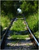 Все рельсы ведут... Фото железной дороги