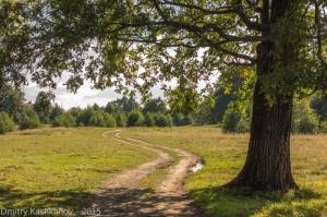 Дорога через луга. Летний полдень