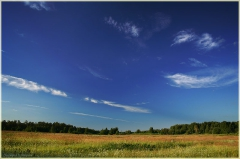 Летний пейзаж. Поле, Лес, Синее небо. Облака. Красивые фото лета