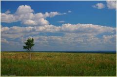 Одиночество фото. Одинокое дерево в поле. Один в поле не воин. Красивые фото лета