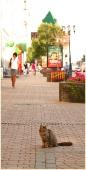 Кот на улице Большая покровка. Фото Нижнего Новгорода. Городской пейзаж