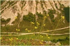Чуфут-кале. Цветы на краю обрыва. Фото высокого разрешения