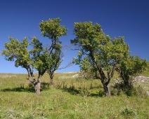 Два дерева. Обои для рабочего стола. Скачать бесплатно. Крым