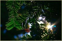 Листья тропического растения в контрсвете