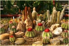 Фотографии кактусов. Кактусовая оранжерея. Крым